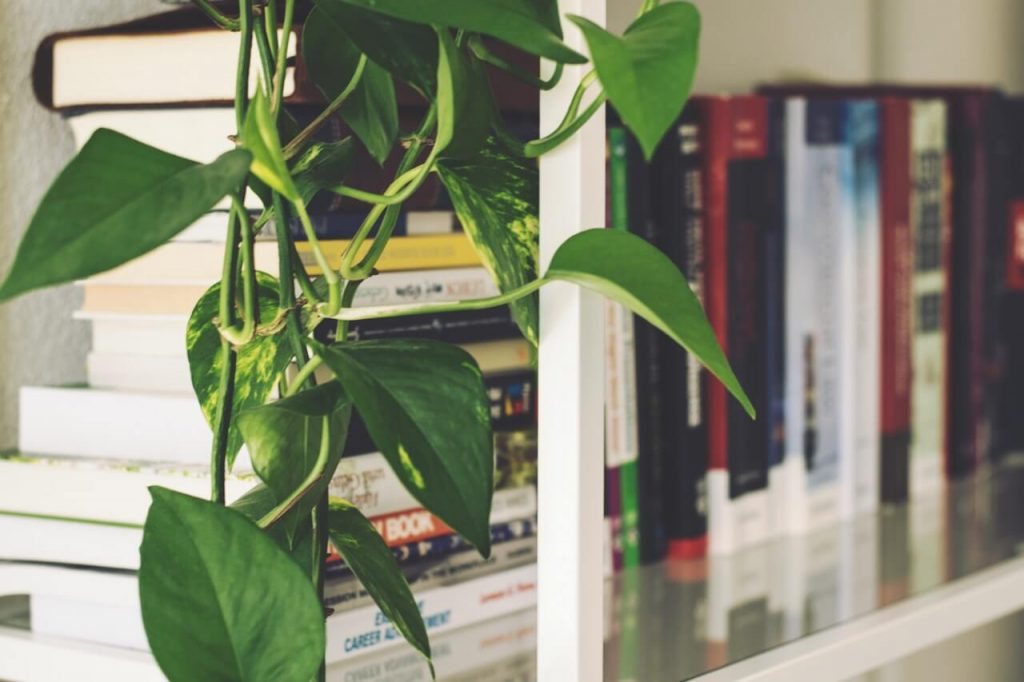 Books on rack next to a plant